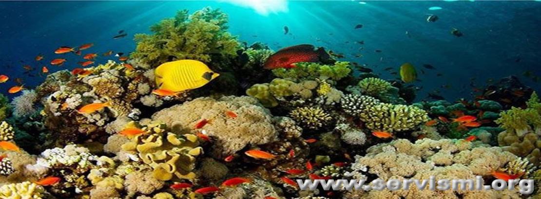 Resif Nedir?